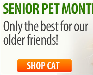 Senior Pet Month—Only the best for our older friends!