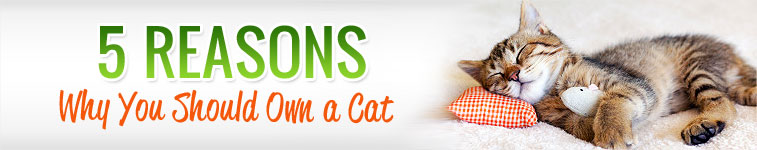 5 reasons why you should own a cat
