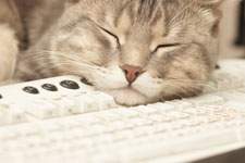 You'll never bebored trying to figure out what your cat is doing or why it is behaving the wayit is.